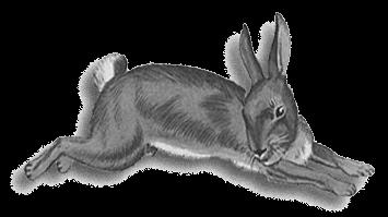 agencia-rabbit